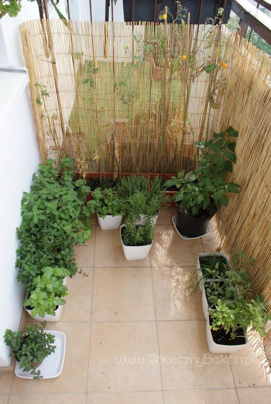 Pomidorki Koktajlowe Strona 4 Z 5 Słoneczny Balkon