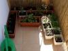2012-05-21 balkonowy warzywniak