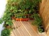 2012-06-17 warzywa na balkonie