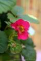 2013-06-02 truskawki kwitną