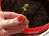 Ogrodnicze wzloty i upadki