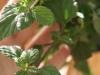 2013-05-19 ziele azteków