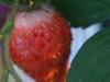 2013-06-29 truskawka już czerwona