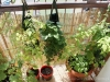 2013-07-06 pomidorki, truskawki i inne