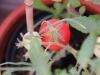 2013-08-14 pomidor