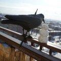 Zimowy słoneczny balkon