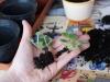 2012-11-26 fiołki - rozmnażanie z listków
