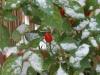 2012-10-28 chili pimenta i pierwszy śnieg