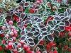 Zimni ogrodnicy, zimna Zośka