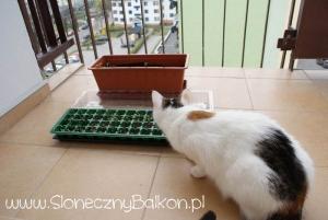 2012-04-12 moja pomocnica :)