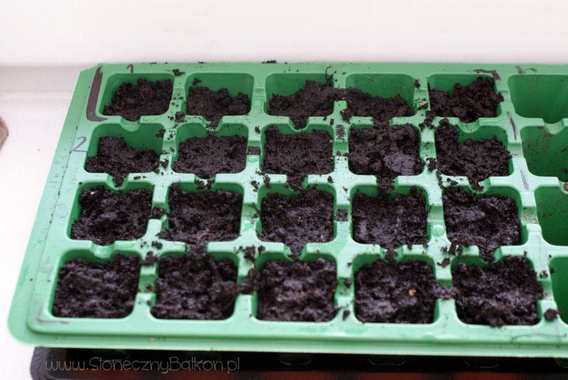 2013-03-02 wysiane od lewej: oregano, tymianek, estragon, kolendra i cząber