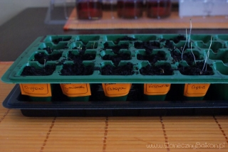 2013-03-10 zasiane zioła