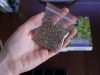 2013-02-04 trawy cytrynowej