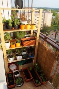 2014-04-29 słoneczny balkon
