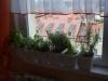 2012-10-08 zioła w kuchni