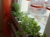 2012-10-29 zioła w kuchni