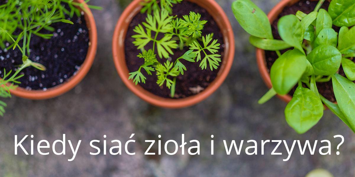 Kiedy siać zioła i warzywa?