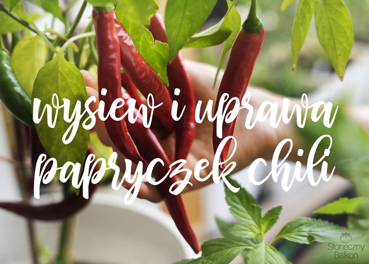 Wysiew i uprawa papryczek chili