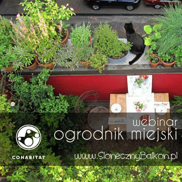 Webinar – Ogrodnik Miejski – relacja