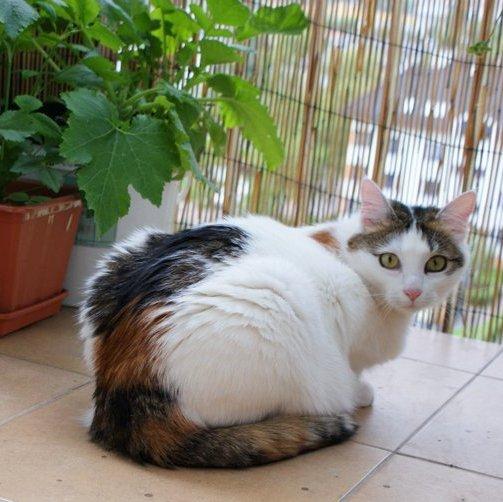 Balkon przyjazny dla kota