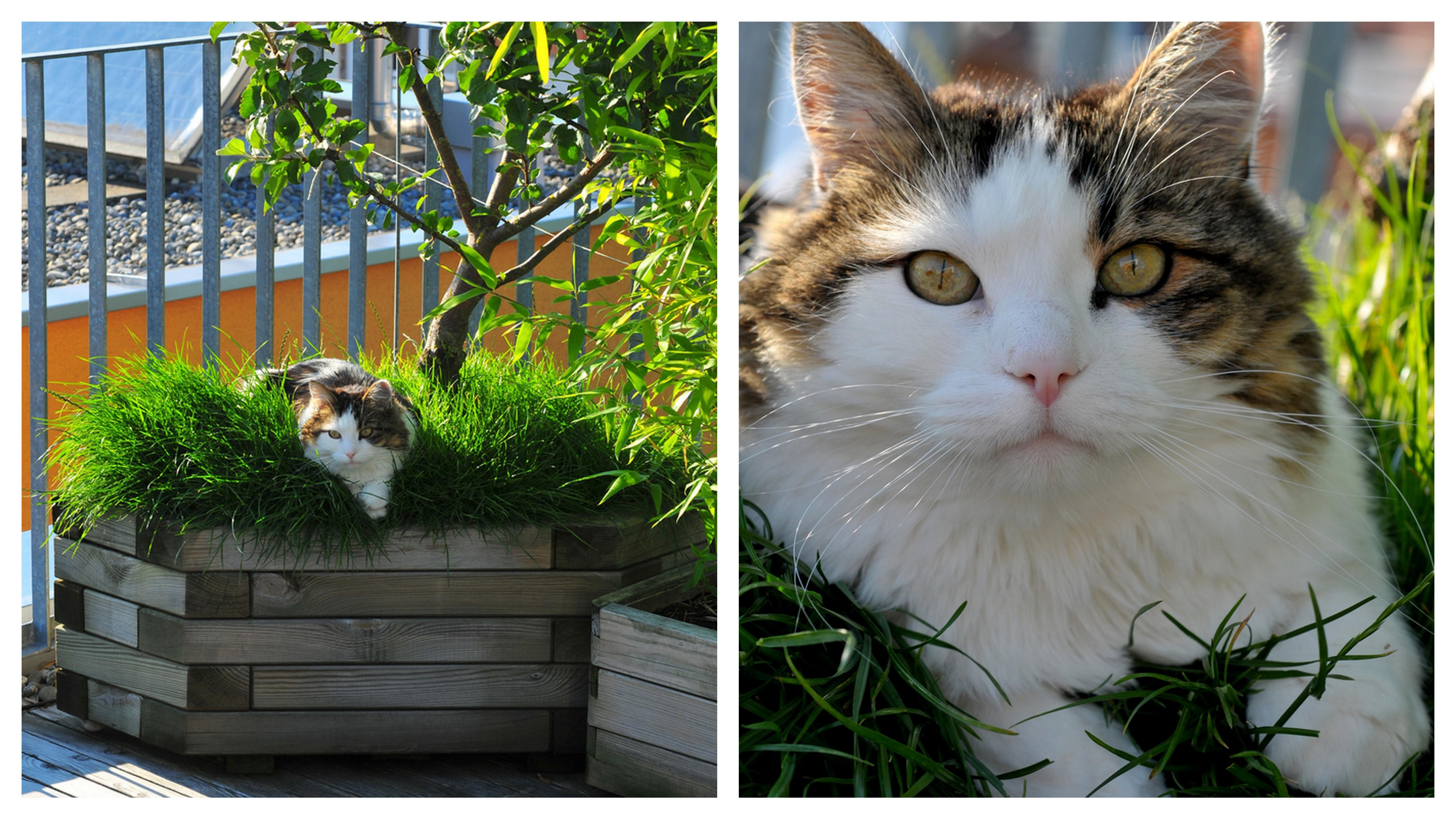koty na balkonach