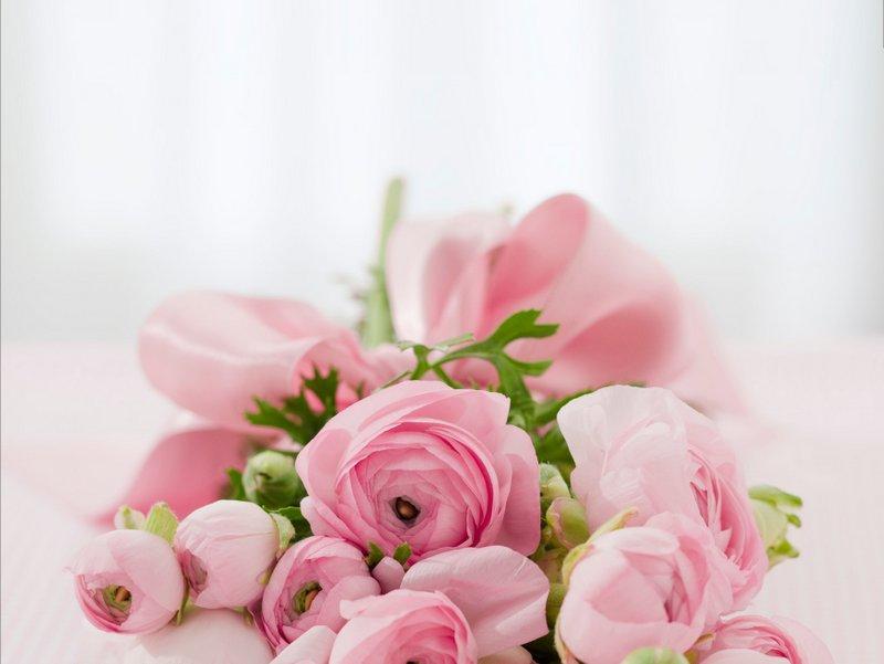 roses-142876(1)