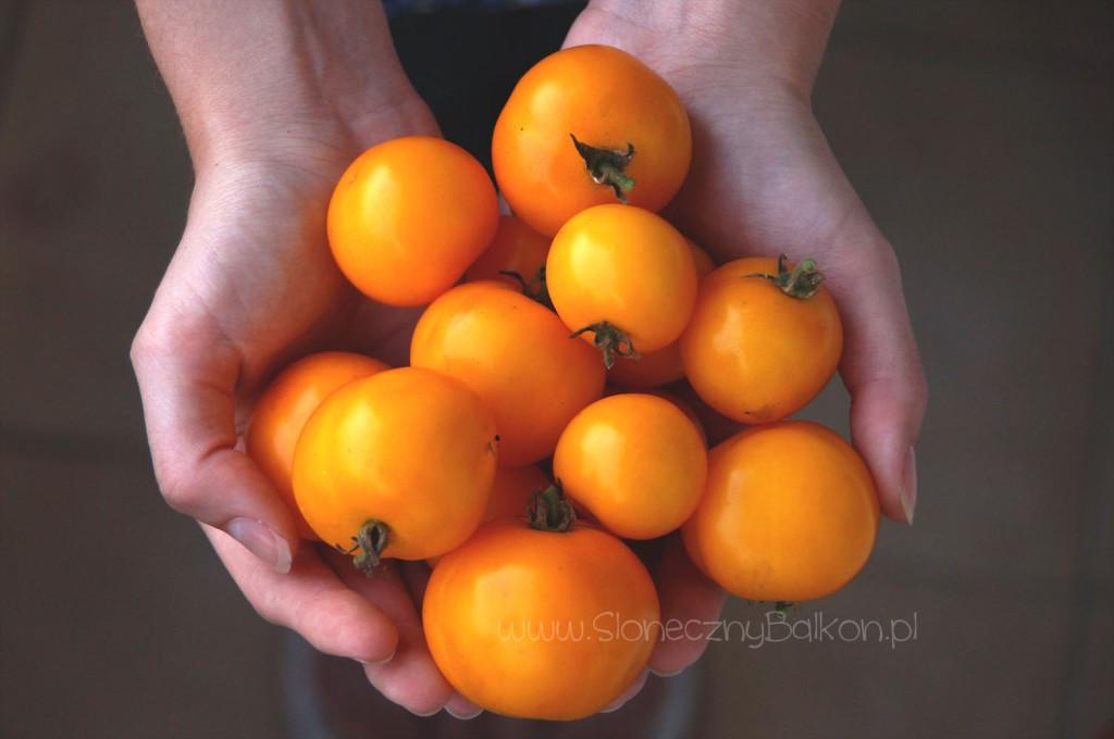 pomidory-koktajlowe-ola-polka