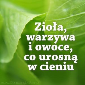 ziola i warzywa do cienia