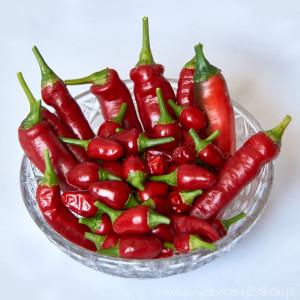 papryczki-chili