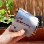 2016-05-24_sadzonka-pomidora3
