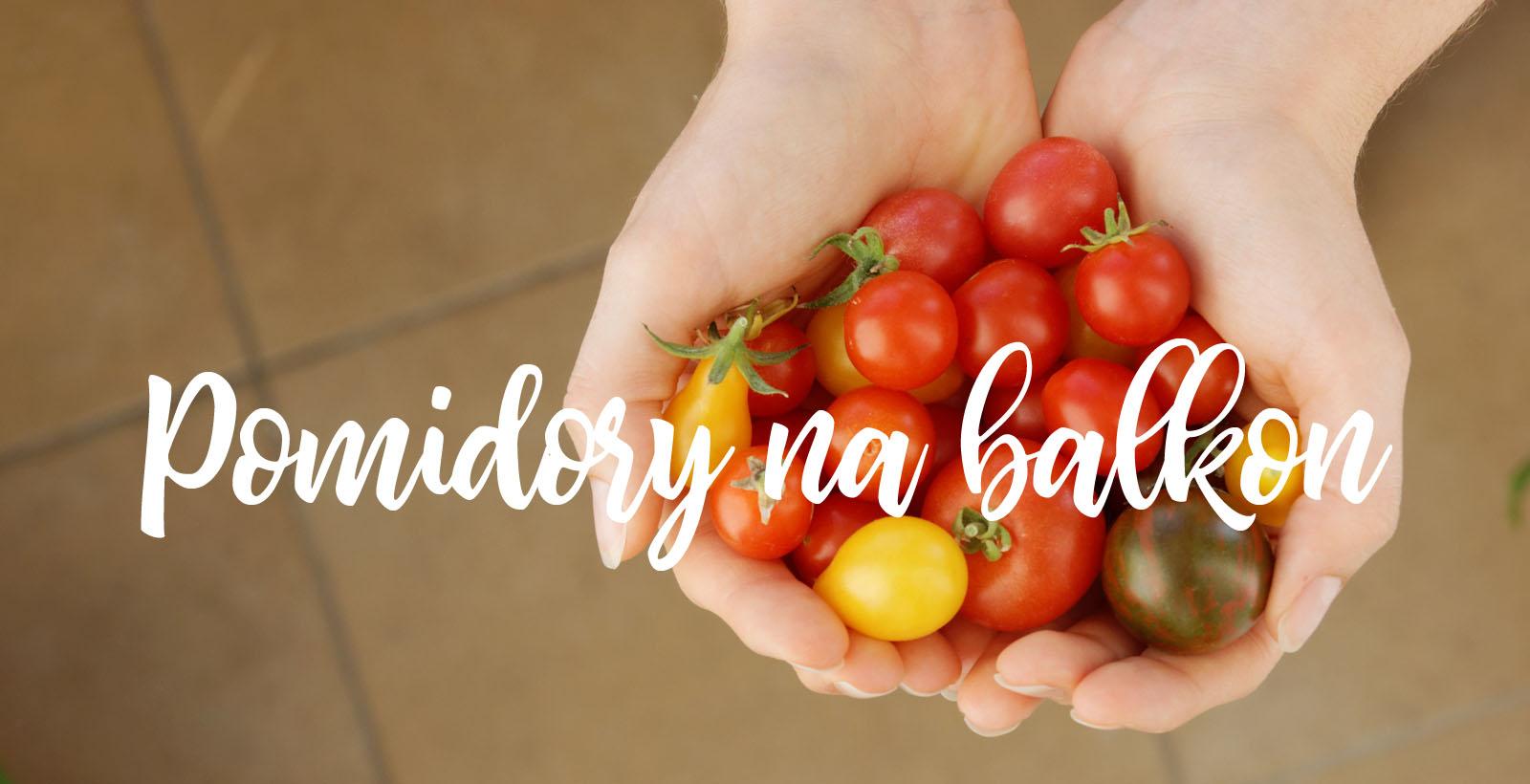 5 ciekawych odmian pomidorów na balkon