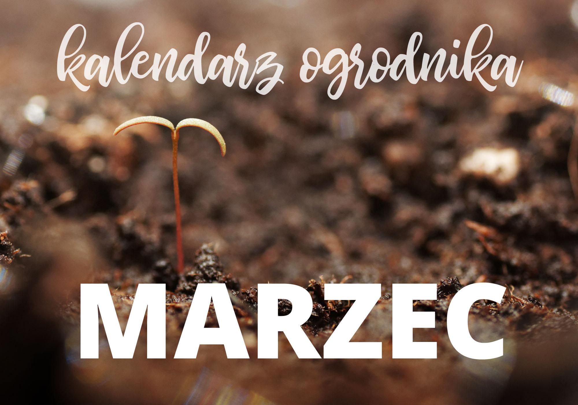 Kalendarz ogrodnika – marzec