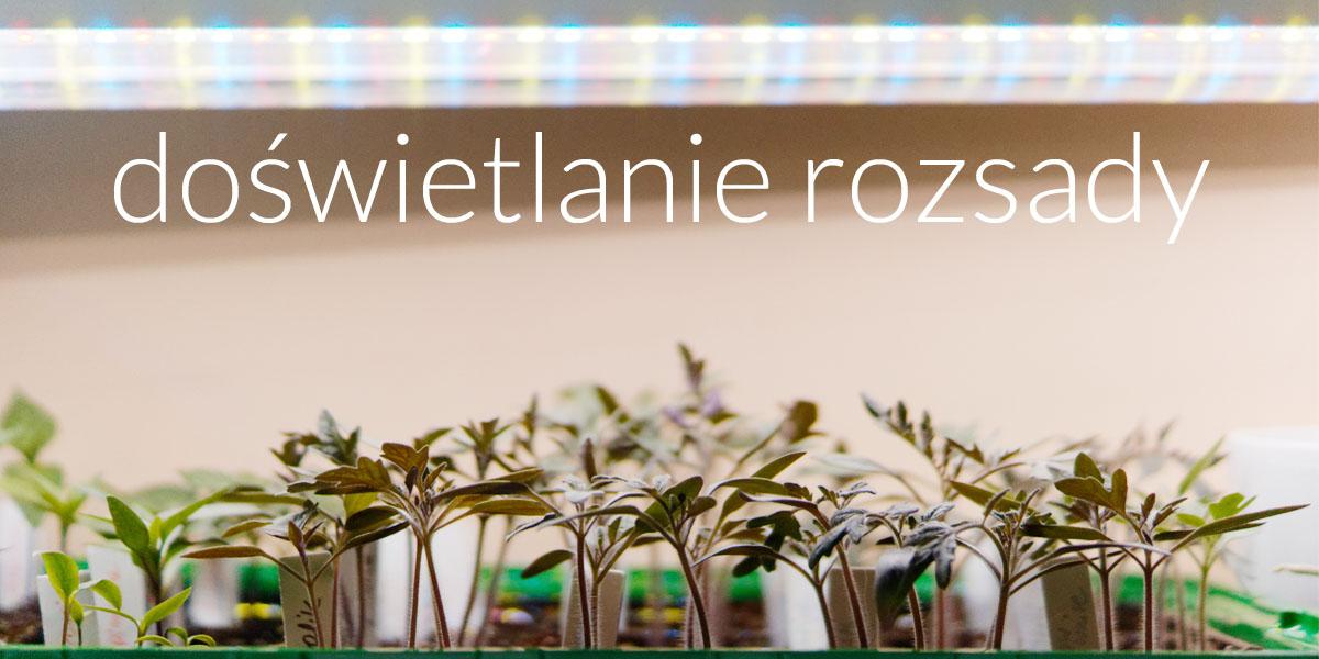 Oświetlenie dla młodych roślin