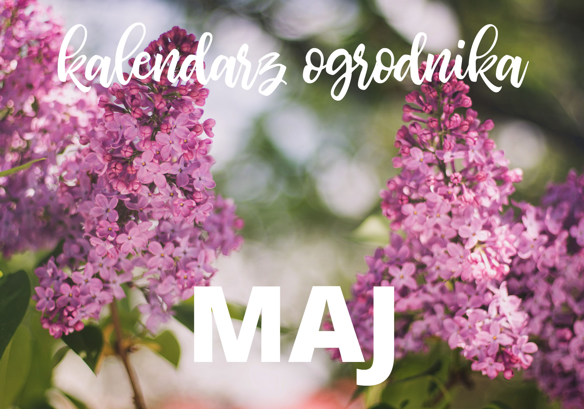 Kalendarz ogrodnika – maj