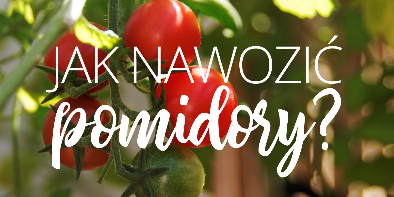 Jak nawozić pomidory?