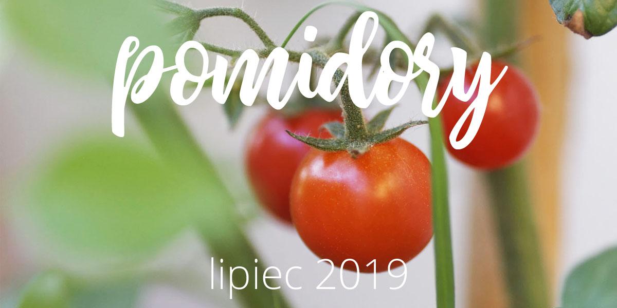 Moje pomidory – lipiec 2019