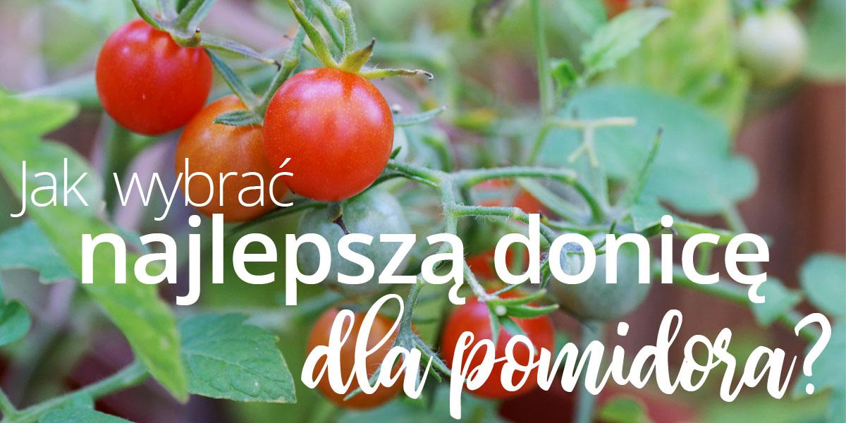 Jak wybrać najlepszą donicę dla pomidora?