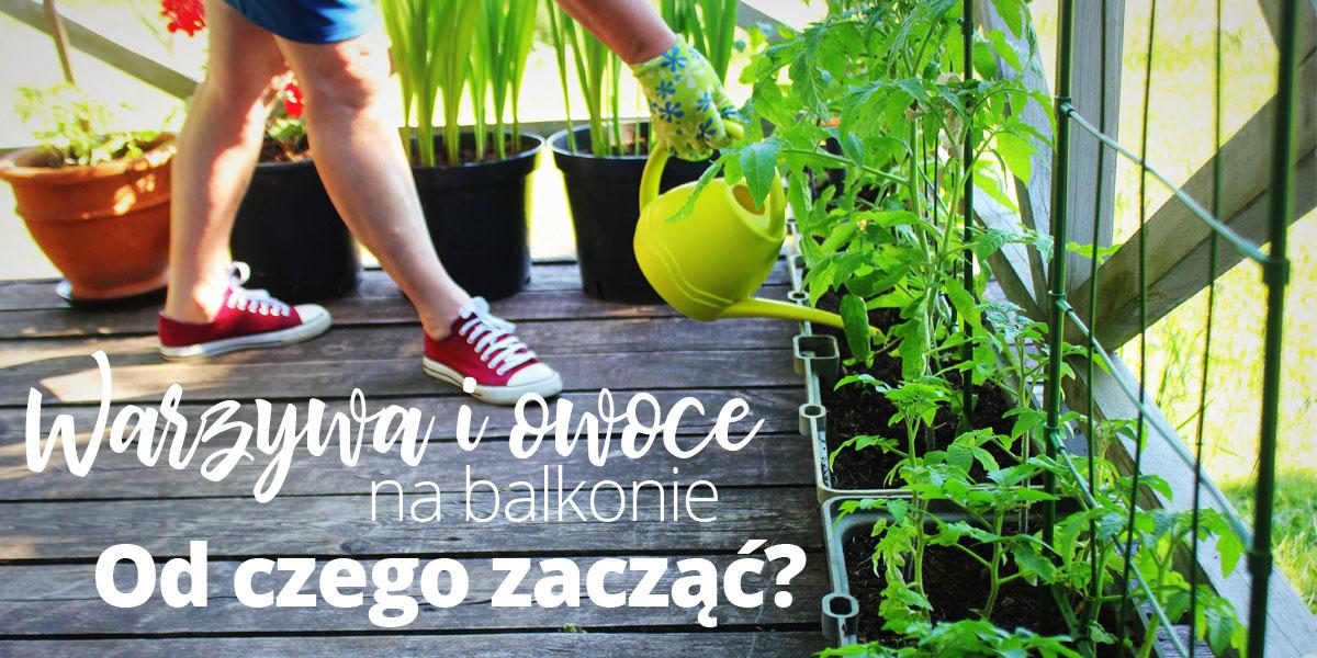Warzywa i owoce na balkonie – od czego zacząć?
